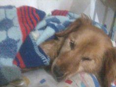 Ronaldhina murió esta noche, acompañada de quienes le dieron sus últimos días fuera de las calles y la crueldad social:(