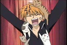 Hee hee cat lover kyo