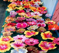 My favorite online hibiscus store: Hidden Valley Hibiscus Growers & Hybridizers of Exotic, Tropical Hibiscus