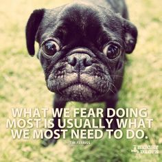 Your daily dose of motivation. Your daily dose of motivation. You might also like: Motivation Pictures pics) Motivatio Motivational Pictures, Best Inspirational Quotes, Motivational Quotes, Pugs, Tim Ferriss, Dog Quotes, Qoutes, Meaningful Quotes, Monday Motivation