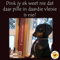 Dink jy ek weet nie dat daar pille in daardie vleisie is nie? Best Quotes, Funny Quotes, Afrikaans, Text Messages, Cute Animals, Humor, Words, Dog Stuff, Denim Skirt
