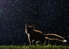 In a Montreal park, a kit plays in the rain in this National Geographic Your Shot Photo of the Day.