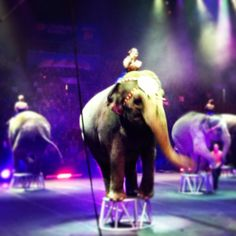 elephants at Ringling Bros. and Barnum & Bailey Circus #travel