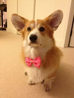 If I ever get to have a dog, I want one like this little guy.