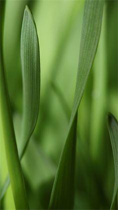 Blades of Grass Wallpaper