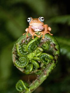 This is a cute frog!!