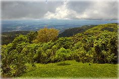 34 Acres of land + coffee plantations and ocean views!