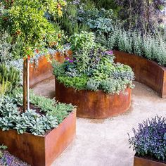 A raised bed garden constructed of industrial steel pipes. Z ...