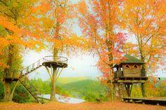 森への想い | バルンバルンの森