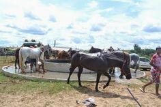 MY HORSE'S  LOVE VAQUEJADA
