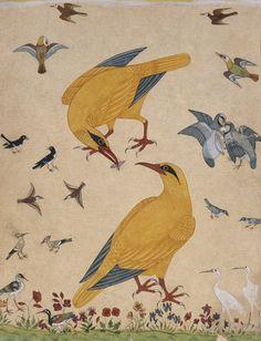 A Variety of Birds. Watercolour. Probably Murshidabad, Mughal, India, c.1760