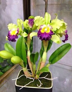 19 Exotic Types of Tropical Flowers for Home Decorations (Various Colors) Orchids Garden, Orchid Plants, Exotic Plants, Tropical Flowers, Tropical Flower Arrangements, Unusual Flowers, Amazing Flowers, Orquideas Cymbidium, Cattleya Orchid