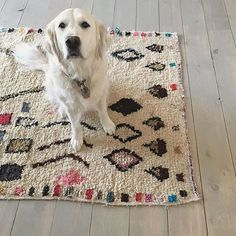 A sweet face + a beautiful rug = most of what I need to get me through the next year. I can never get enough of your #dspetstyle photos celebrating your favorite fuzzy friends at home. Thank you so much for sharing them with us ❤️  by @territorydesign