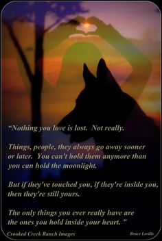 German Shepherd by tami Hockey Puck, Snuggles, Sassy, German Shepherd Dogs, German Shepherds, Pet Loss, Rainbow Bridge, Pet Memorials, Four Legged