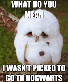 It's okay cute owl we love you!