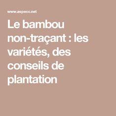 Le bambou non-traçant : les variétés, des conseils de plantation