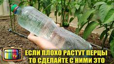 Small Farm, Gardening Tips, Garden Design, Water Bottle, Home And Garden, Pepper, Youtube, Ideas, Backyard Farming