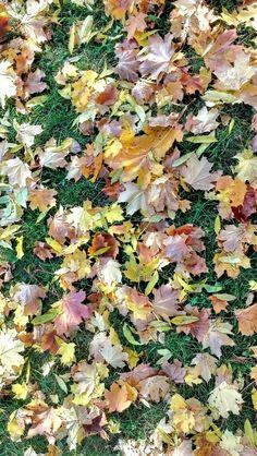 Autumn wallpaper.Taken by #HTCOneX+