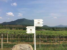 Hua Hin, Thailand. #Vineyard.