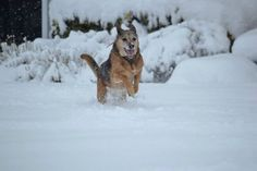 Winter weather is snow problem for our cold loving canines like Maggie May
