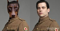 If the Characters in Downton Abbey Were Portrayed by Canine Actors, What Breeds Would They Be?