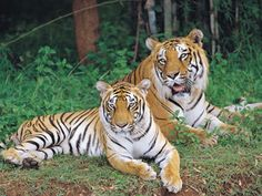 Parambikulam Tiger Reserve in Kerala, India