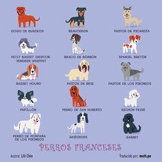 ¡Asombroso! La artista Lili Chin se ha tomado la molestia de crear una práctica y divertida guía que nos muestra la procedencia de la mayoría de perros que conocemos. ¿Encuentras el tuyo?