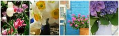 Blog Banner ~ Spring 2012 ~ Original Colour Photography by Suzanne MacCrone