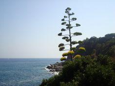 Lloret de Mar, #Spain