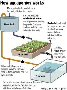 AquHow an aquaponic system in it's basic essence worksaponics