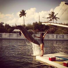 Dolphin show, Theatre of the sea, Islamorada, Florida.