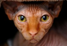 Behold the Sphynx by Josh Norem - LOVE his photography!  LOVE THIS SHOT!