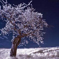 Der Frühling im infrarotem Licht