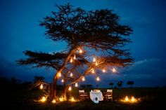 romantic-tree-lighting - Once Wed Romantic Places, Romantic Dinners, Romantic Times, Romantic Picnics, Tree Lanterns, Karen Blixen, Jar Lights, In Vino Veritas, Tree Lighting