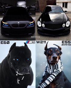 U wanna buy this car. Buy Bitcoin first. Mercedes Benz Sls Amg, Mercedes Car, Bmw I, Top Luxury Cars, Bmw Love, Exotic Sports Cars, Audi Tt, Bmw Cars, Cute Funny Animals
