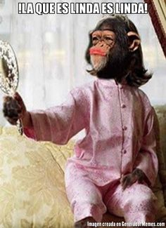 """"""" Even if the monkey is dressed in silk, it remains a monkey. Spanish Jokes, Funny Spanish Memes, Memes Super Graciosos, Online Gratis, Real Beauty, True Beauty, Cute Gif, Funny Faces, Just In Case"""