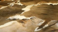 How to tan a deer hide Tanned Hides Pic