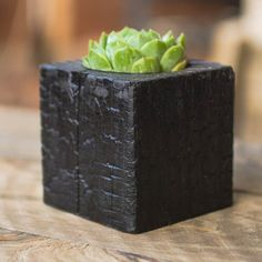 Succulent with Shou Sugi Ban Wood Planter  Chaos by HammerandBrush, $40.00