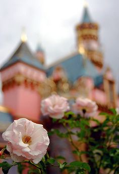 "disney teamed with Jackson Perkins (famous rose breeders) and created the ""Disneyland Rose""...Behold"