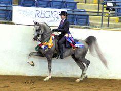 Arabhorse.com - Springwater Farms Arabians - Arabian Horse