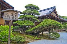 Rikushu no Matsu