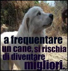 A frequentare un cane | BESTI.it - immagini divertenti, foto, barzellette, video