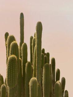 Fine Art Photograph Home Decor Desert Cactus by WilderCalifornia