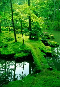 Moss Bridge - Saiho-ji Temple Kyoto, Japan Known as Kokedera, or the Moss Temple, Saiho-ji is home to one of Kyoto's most famous tourist attractions, the moss garden. Over 120 types of moss cover the garden grounds. Photo Japon, Japan Photo, Moss Temple, Moss For Sale, Beautiful World, Beautiful Places, Gorgeous Gorgeous, Beautiful Scenery, Japon Tokyo