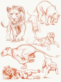 Lion sketch on Behance : Lion sketch on BehanceYou can find Behance and more on our website.Lion sketch on Behance : Lion sketch on Behance Lion Drawing, Animal Art, Sketches, Art Reference Poses, Leaves Sketch, Animal Sketches, Lion Sketch, Animal Drawings Sketches, Big Cats Art
