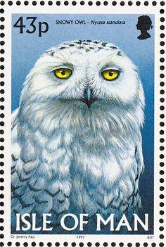 Snowy Owl ,  Nyctea scandiaca (Bubo scandiacus) Birds on stamp of Isle of Man, circa 1997