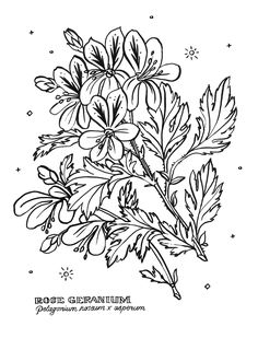 Botanical coloring book pages created for Humaniteos for the survivors of sex trafficking to color on during aromatic art therapy.