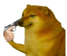 Lol Memes, Stupid Funny Memes, Doge Meme, Current Mood Meme, Meme Stickers, Meme Template, Wholesome Memes, Cursed Images, Meme Faces