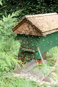 Save The Bees! Build A Top Bar Bee Hive! (Instructions Included)