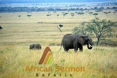 7-Days Kenya Explorer Safari - One week packed with adventurers trip to Ol Pejeta, Lake Nakuru, Lake Naivasha and the legendary Maasai Mara National Reserve